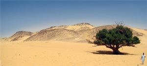 tree-in-desert